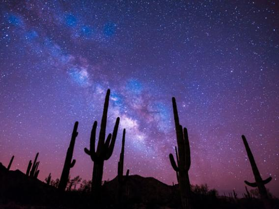 Photo of saguaro cacti against night sky
